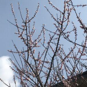 桜が^ ^