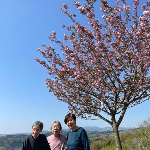 倶利伽羅の八重桜