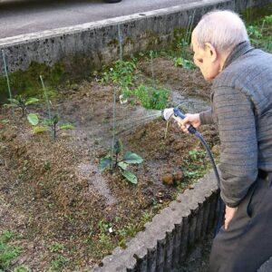 家庭菜園(*⌒―⌒*)